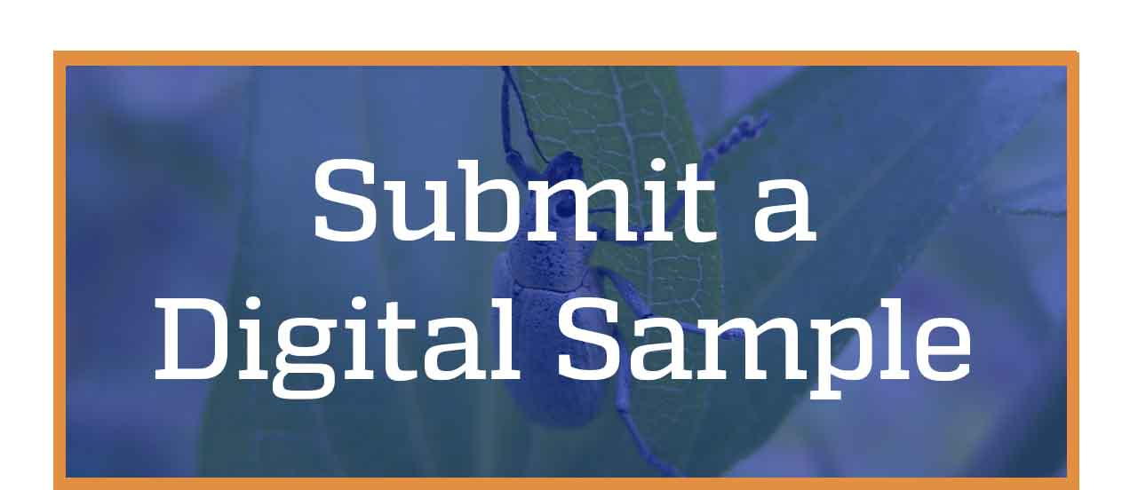 Submit a digital sample